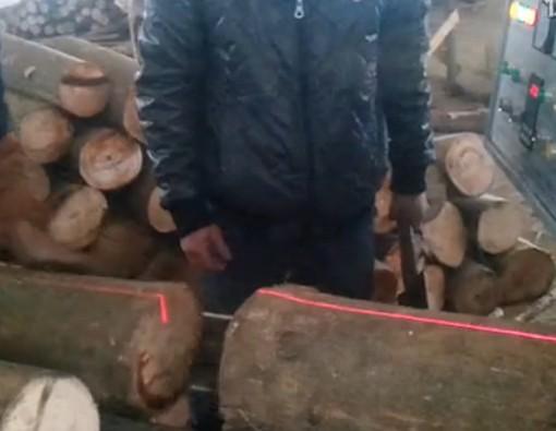 天悦圆木多片锯开油桐木
